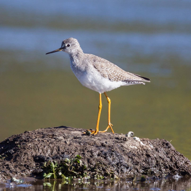 ave posada sobre piedra laguna rosales avistaje observacion